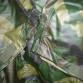US ARMY woodland WDL rain parka WET WEATHER pláštěnka
